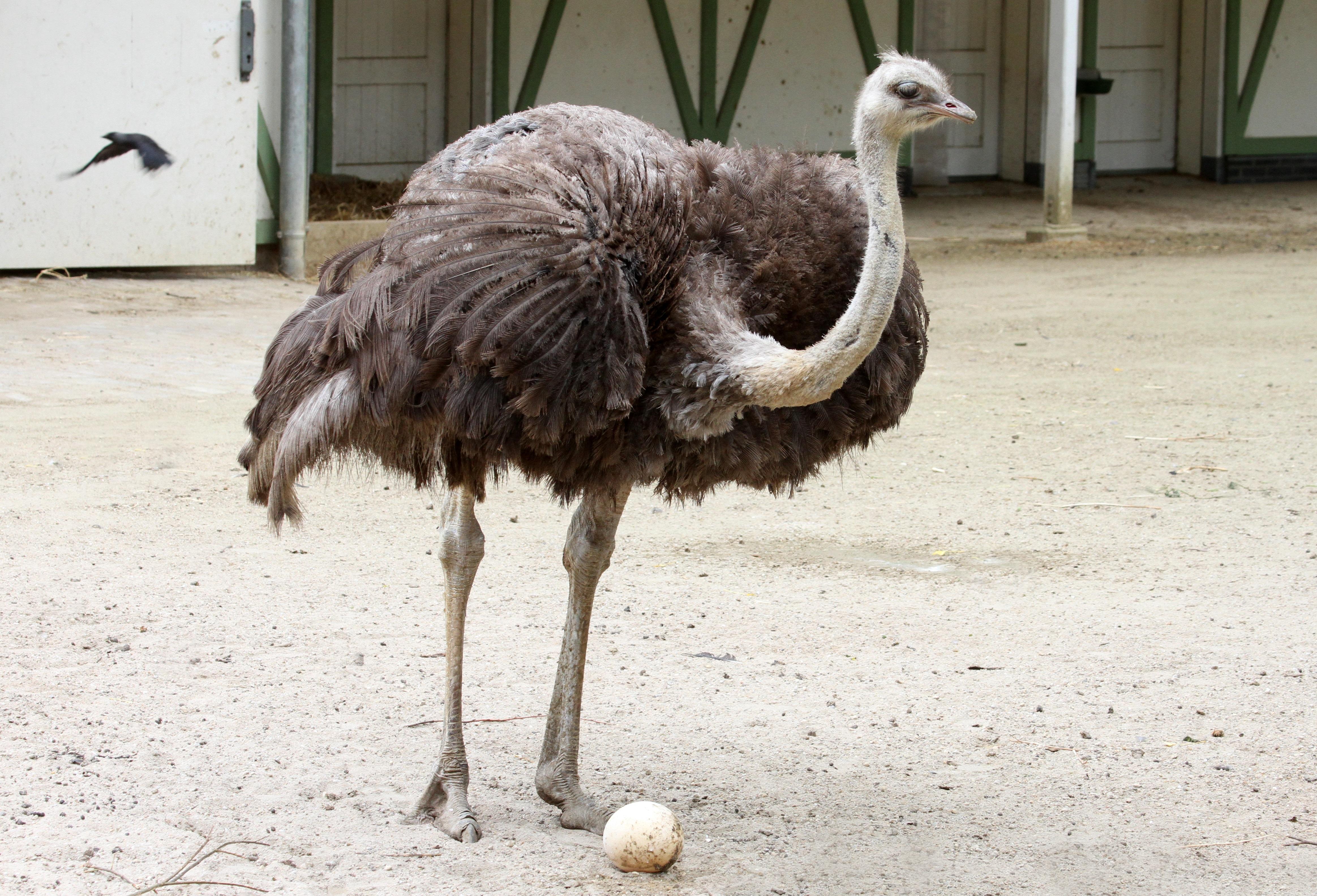 Ostrich Brouwerij 't IJ