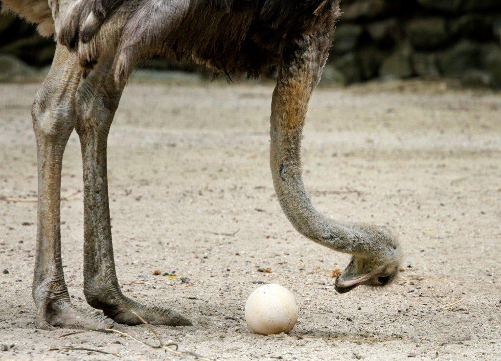 struisvogel brouwerij Amsterdam